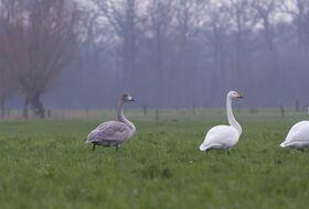 Foto Wijnand van Buuren