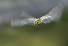 Foto Martin Hoornweg