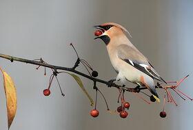 Foto Piet de Poorter