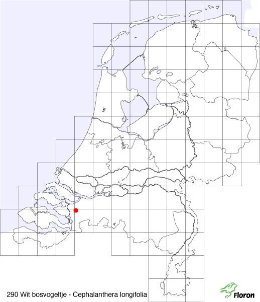 Cephalanthera longifolia (L.) Fritsch | Verspreiding wit bosvogeltje in Nederland (tot 2009).